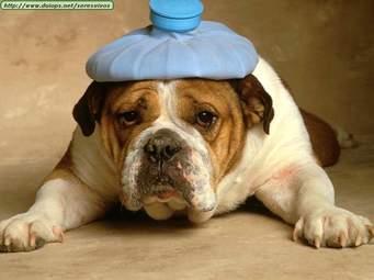 The Migraine