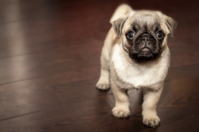 9 Important Things to Consider Before Bringing a Puppy Home